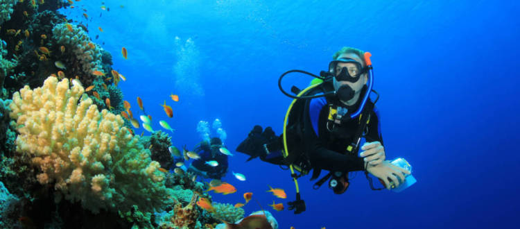 What Are the Different Scuba Certification Levels?