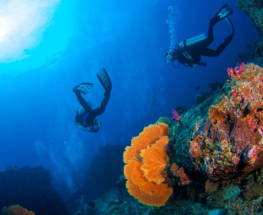 5 Reasons Red Sea Scuba Diving Should Be on Your Radar