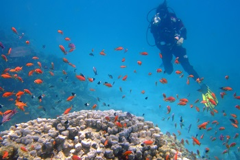 What Is Scuba Diving?
