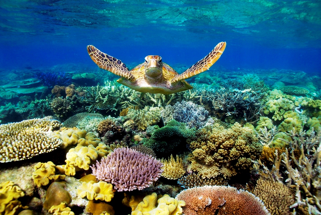Australia Scuba Diving Trip Of 2007