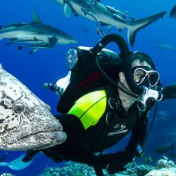 Speciality diver swimming with a grouper and sharks