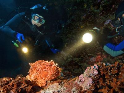 night diving nj